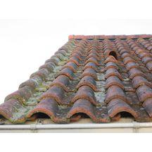 antimousse toiture mur et fa ade algimouss bidon de 30. Black Bedroom Furniture Sets. Home Design Ideas